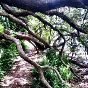 trail-running-hazards-branches