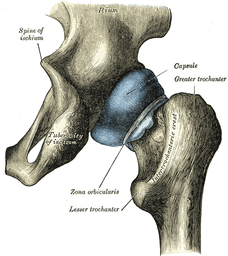 Labral-Cartilage-Labral-Tear
