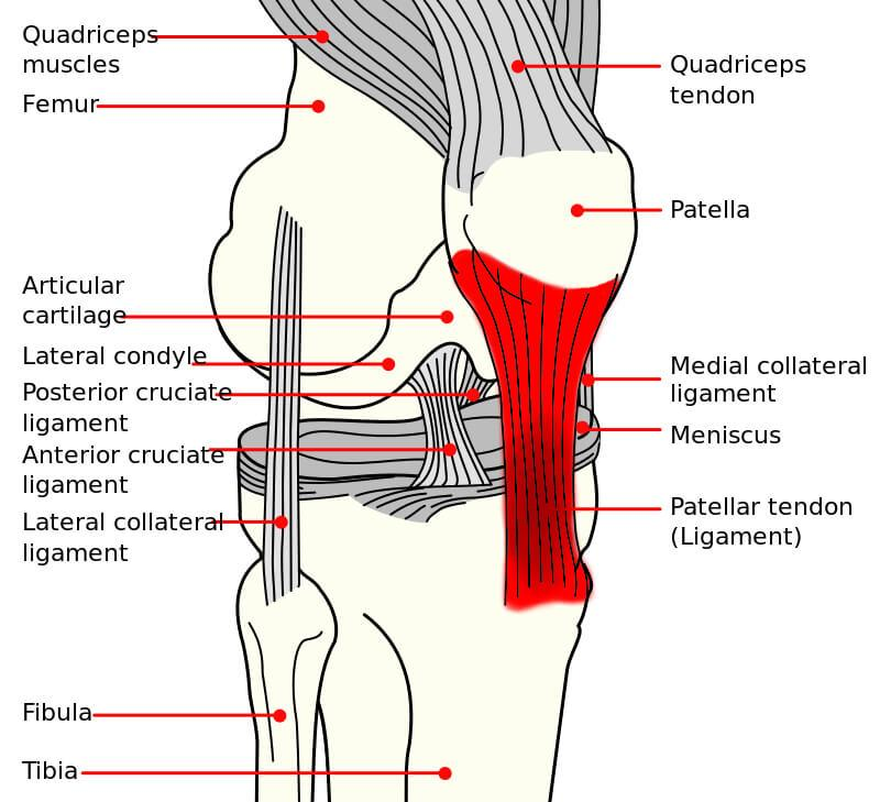 patellar tendonitis (jumper's knee) - causes, treatment & prevention, Cephalic Vein