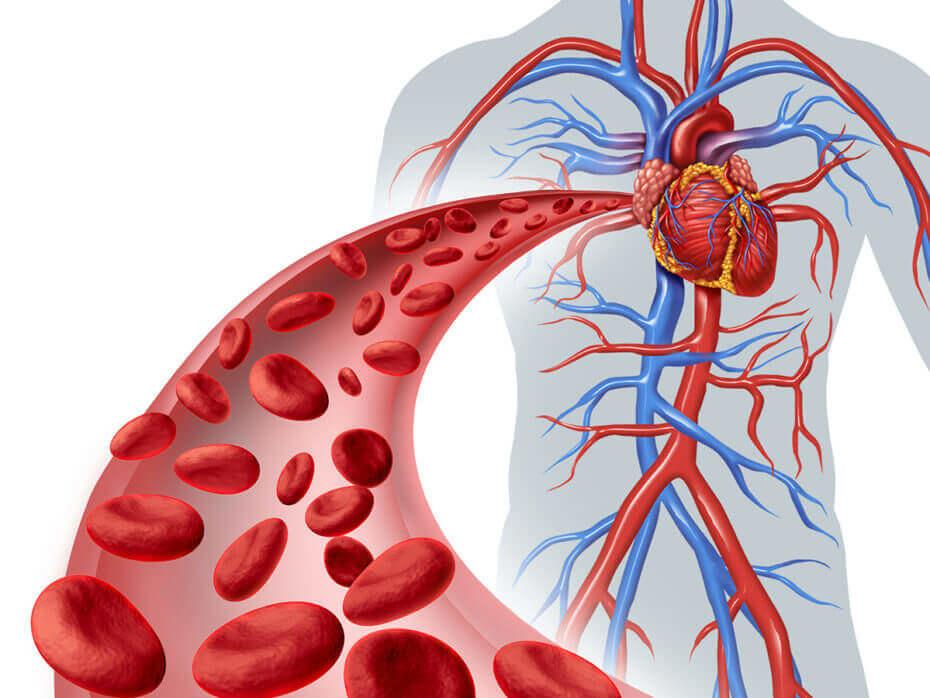 Hemolytic-Anemia-from-Footstrikes-red-blood-cell-circulation