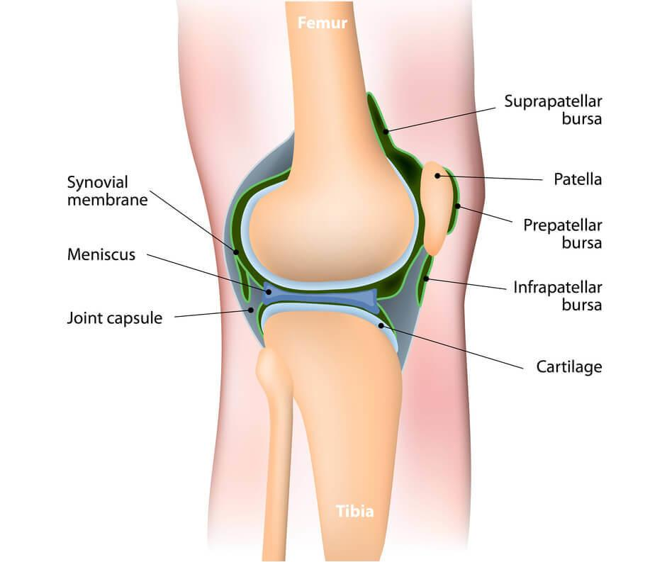 Synovitis-Synovial-Joint-of-the-Knee