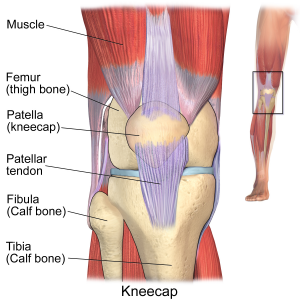Tendonitis risky complications causes treatment and prevention it functions with the quadriceps tendon which connects the patella kneecap to the quadriceps femoris upper thigh muscle to straighten the knee ccuart Choice Image