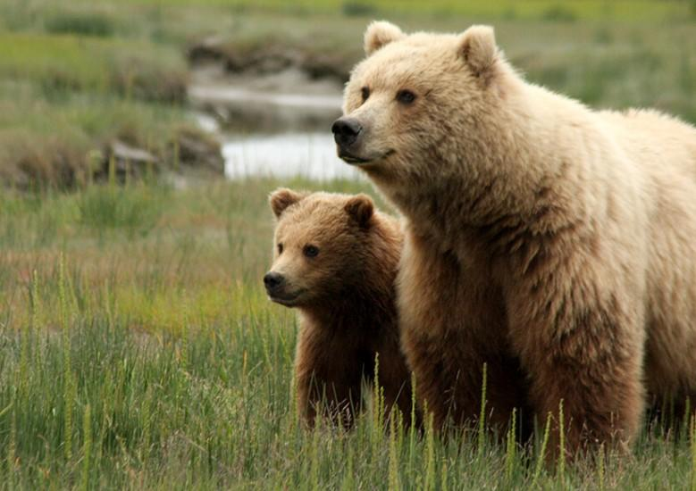 here are tips for trail runners to be bear aware