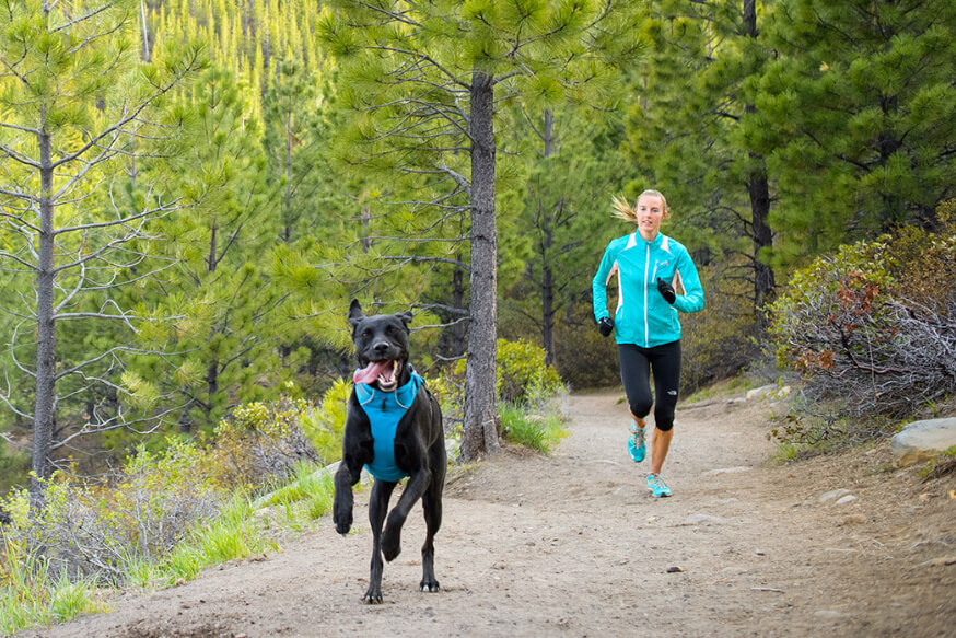running with dogs tips