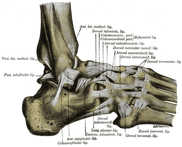 lateral foot ligaments