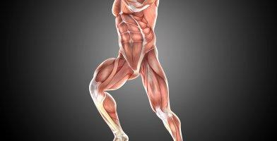 An in depth and comprehensive Runner's Guide Trigger Point