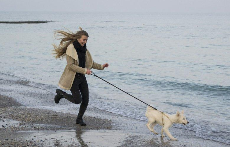 Top Tips for How to Efficiently Run With Your Dog