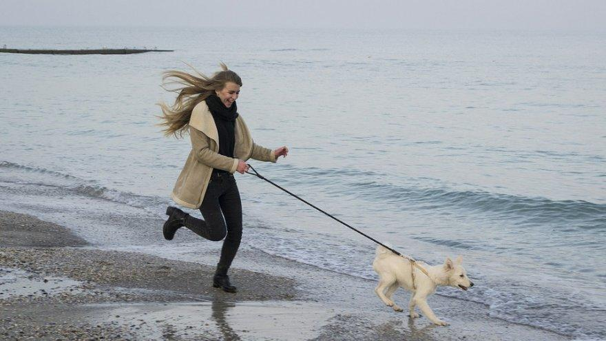 how to run with your dog without problems