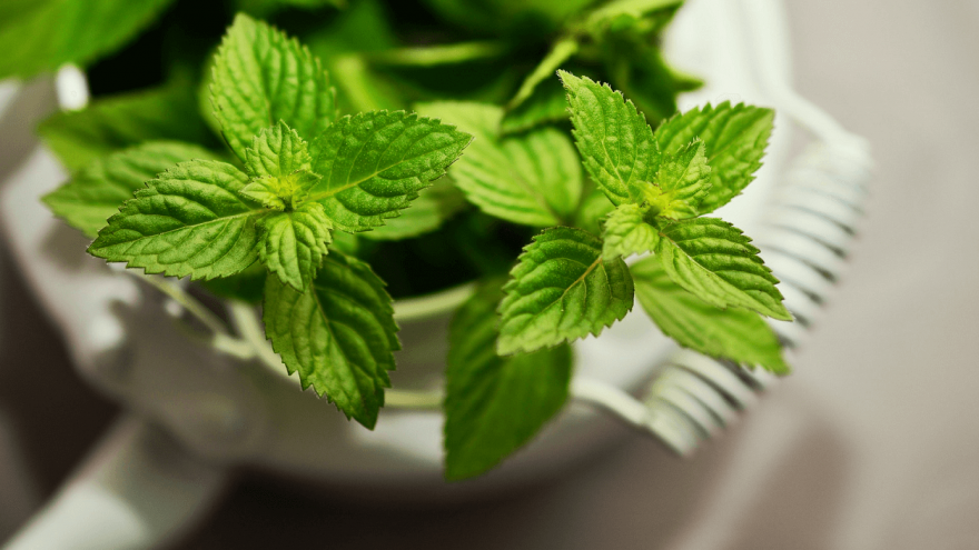 The fascinating impact of peppermint on performance.