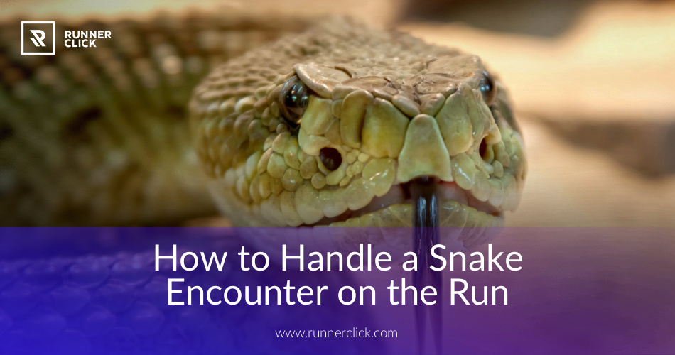 an encounter with snake How to hike in rattlesnake country  winter and early spring when cool temperatures keep snakes in their dens if you encounter a rattlesnake on trail: freeze.
